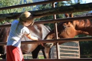 Children and horses programs