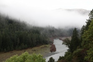 Low Clouds drape the trees of the Klamath River