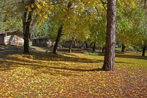 Golden Leaves Covering California's Dude Ranch