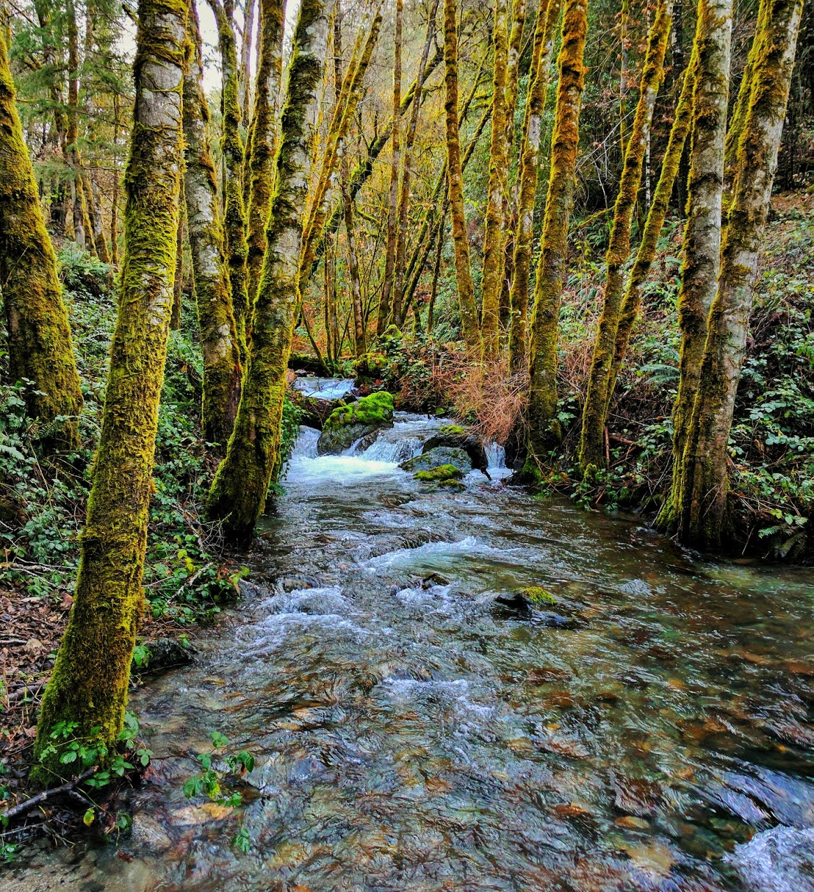 In the Spring, the creeks of the Klamath Forest flow high and cold